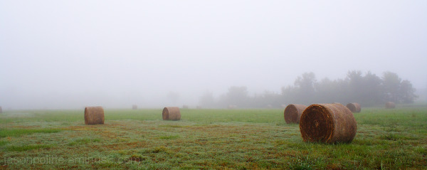 Rolls of hay shrouded by a blanket of fog