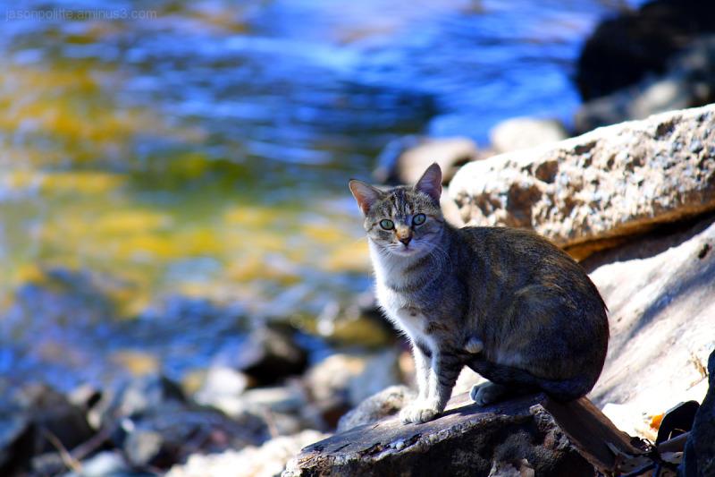 Stray cat, mother of kittens, near Arkansas River