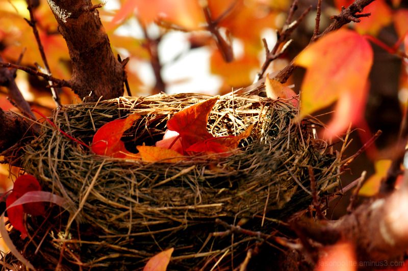 Autumn leaves fill this bird nest.