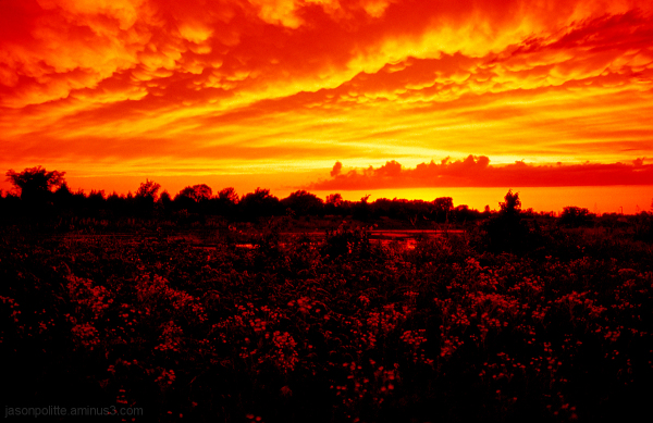 A fiery, mammatus-filles sky with flowers