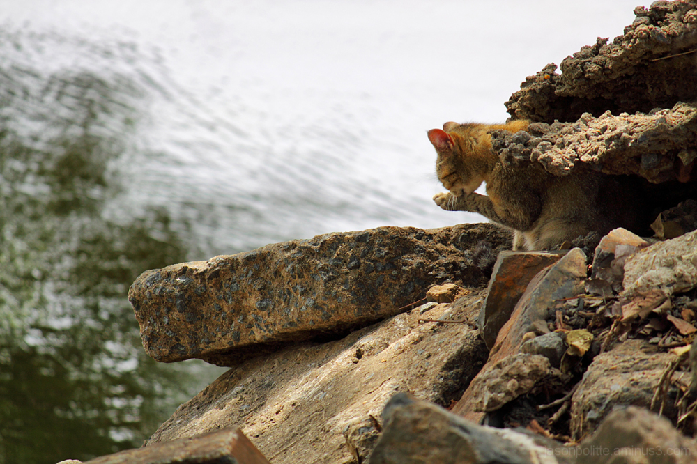 Stray cat on the banks of the Arkansas River