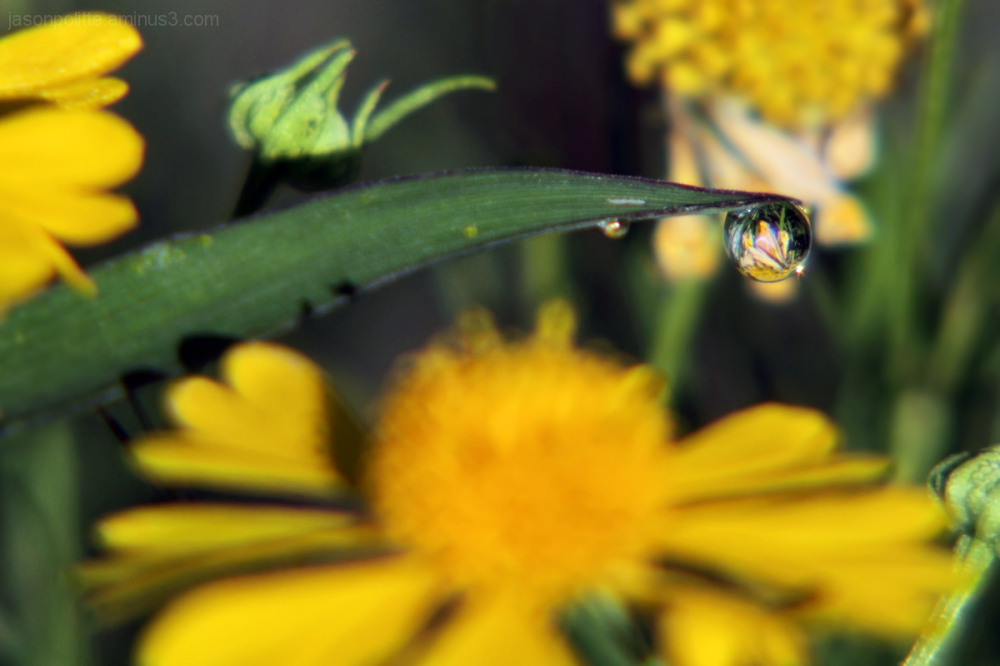 Flowers through the dew droplet