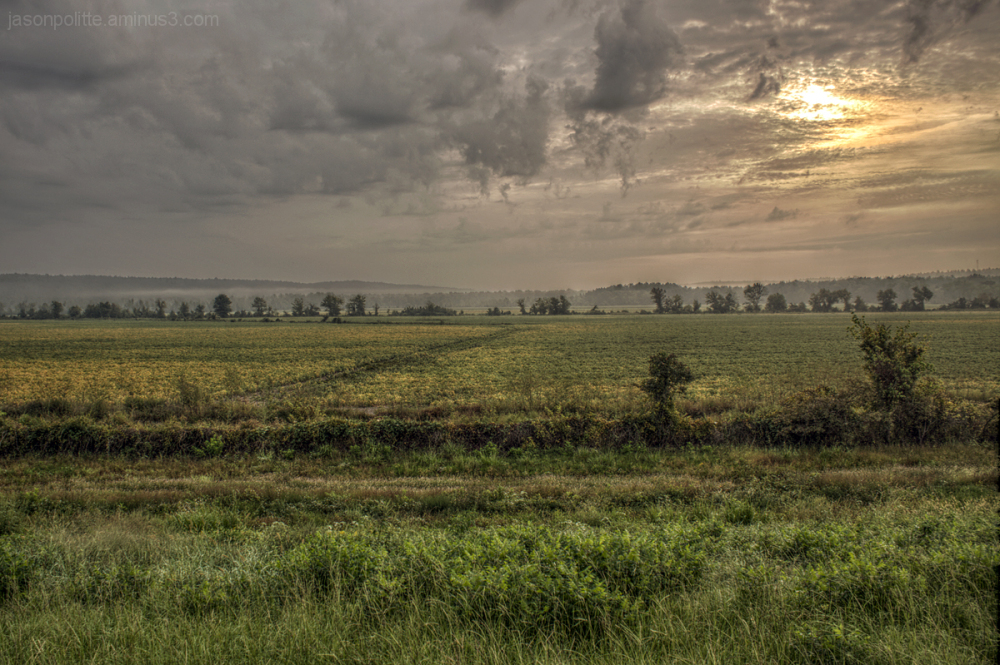 Sunrise over the beanfields in central Arkansas