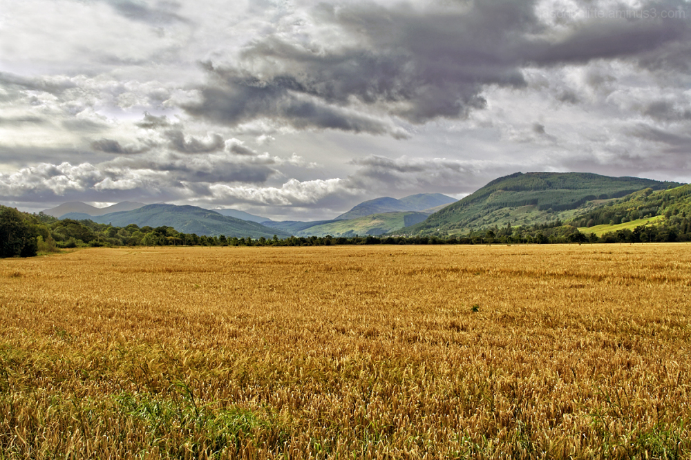 Scotland - Golden Fields and Green Hills