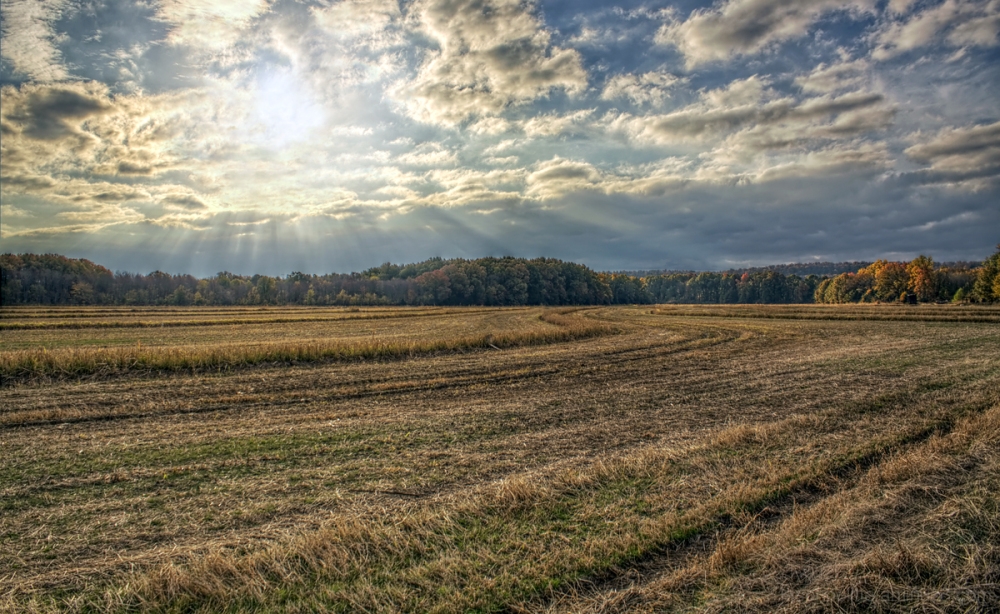 Autumn rays over a field of cut hay