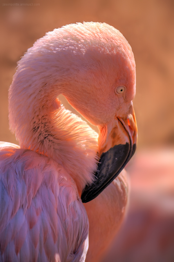 Pink Flamingo poses for a portrait