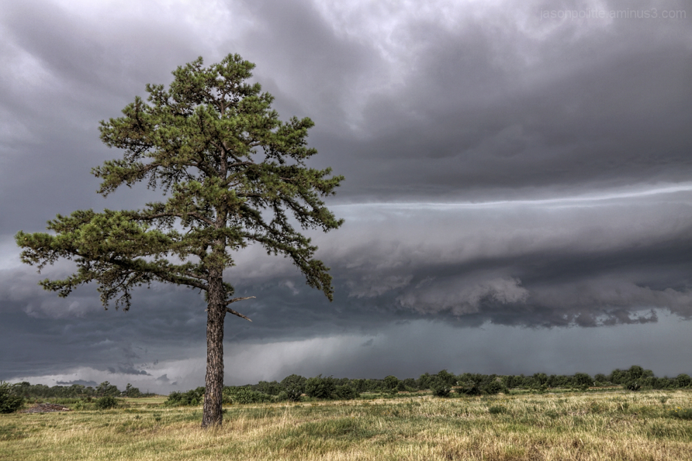 A powerful storm approaches this lone pine tree.