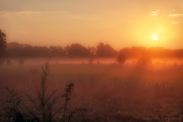 Watching the sun rise over foggy pastures