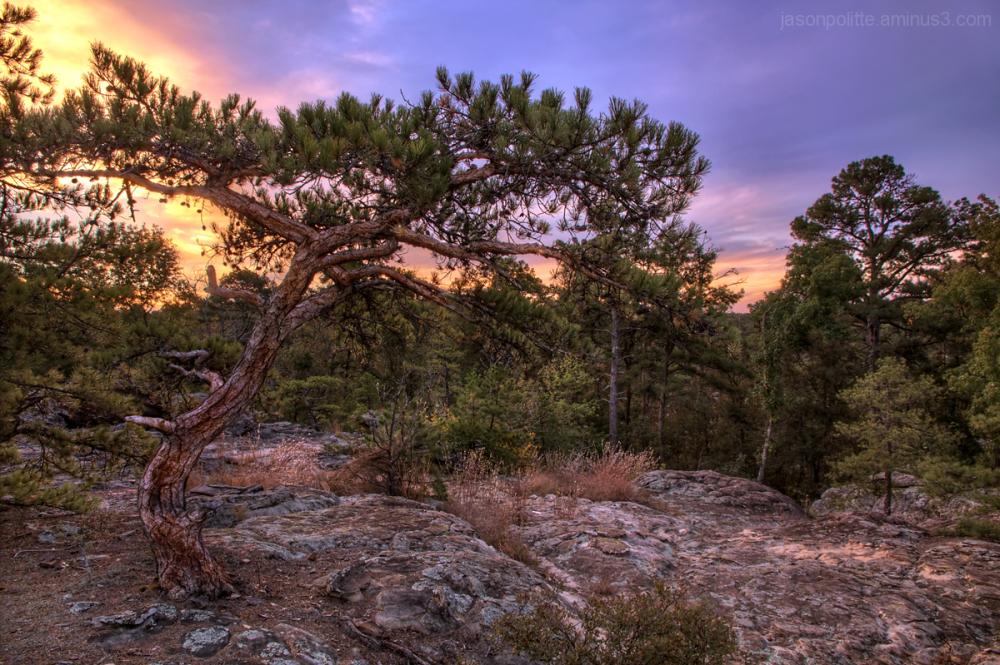 Petit Jean Mountain Bonsai Tree