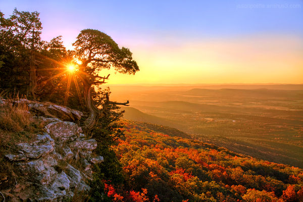 Cedar Tree atop Arkansas' Mt. Magazine in Autumn