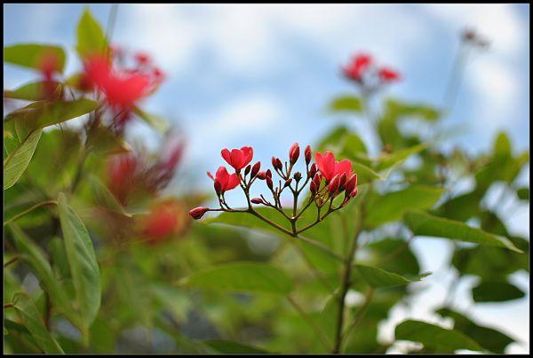 Beauty of a Flower