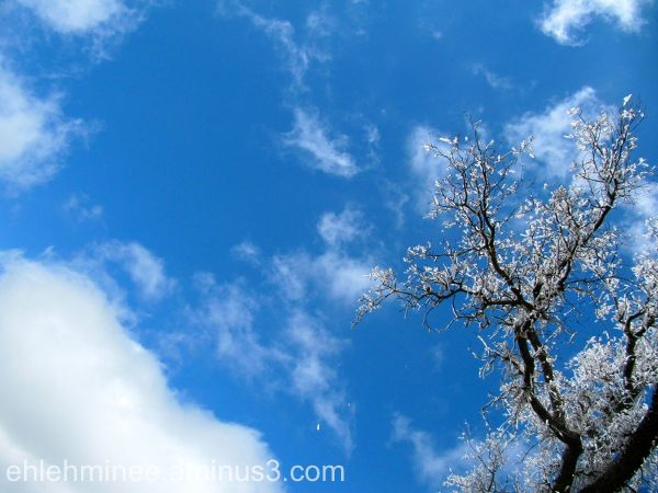 A bare icy tree in winter and the Sky