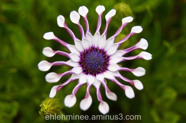 Purple Strange Flower