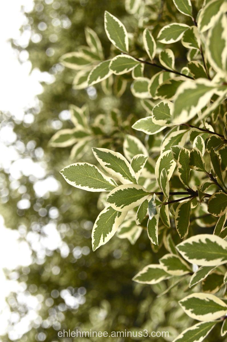 Green Sunlit leaves