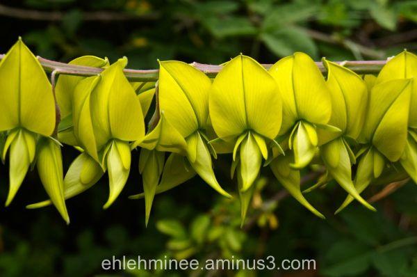 yellow flower line