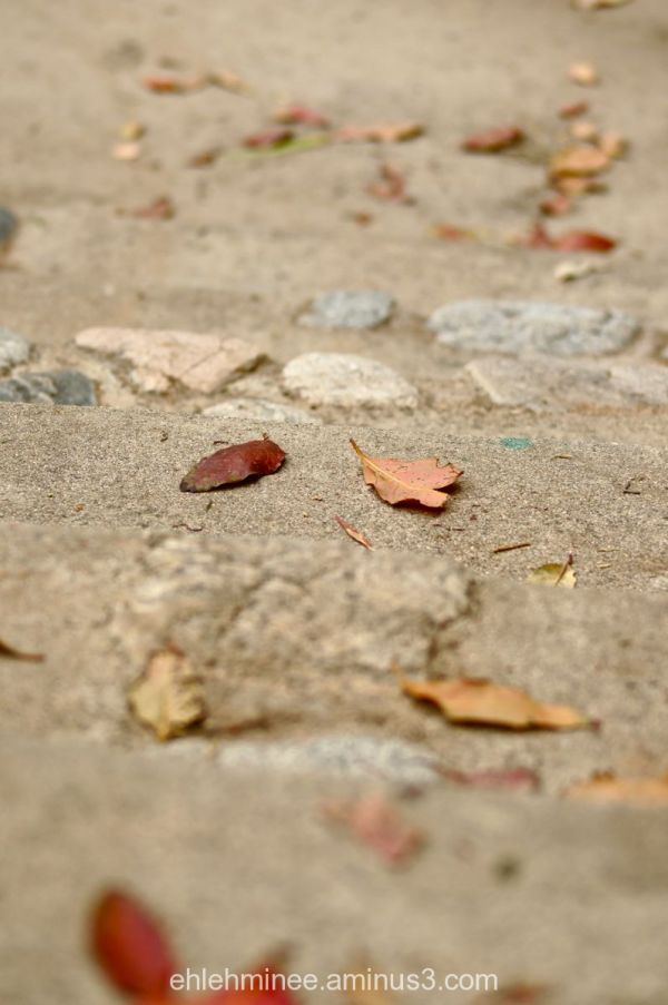 Fallen Leaves on stairs
