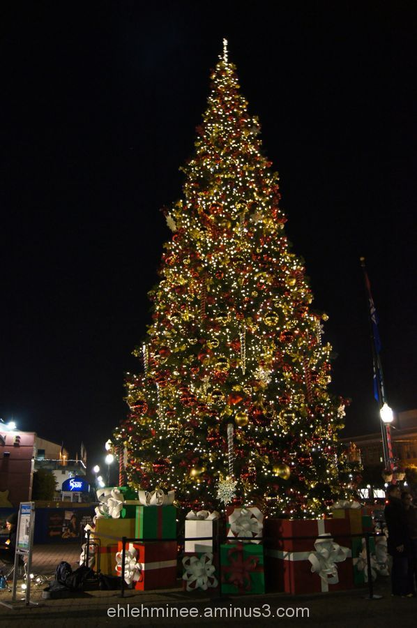 San Francisco Fisherman's Wharf Christmas Tree