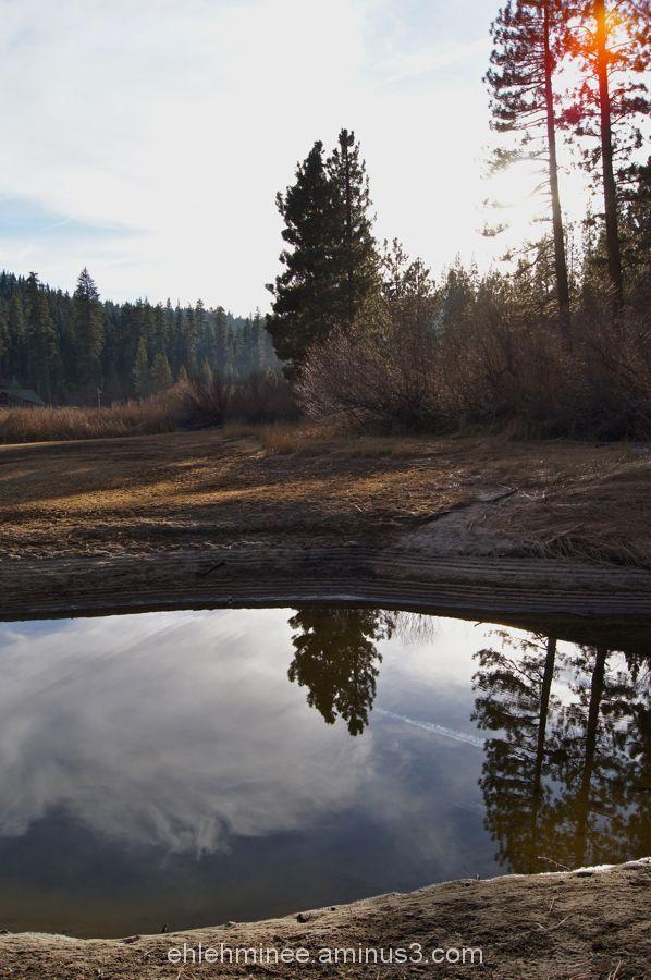 Hume Lake Pine Tree Reflection