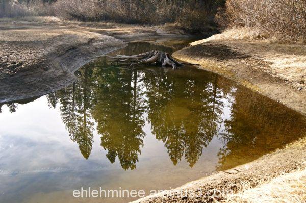 Hume Lake Reflection Pine Tree