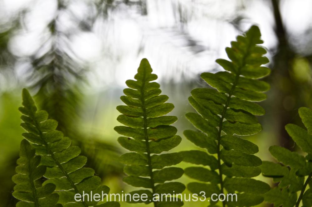 Three fern Leaves