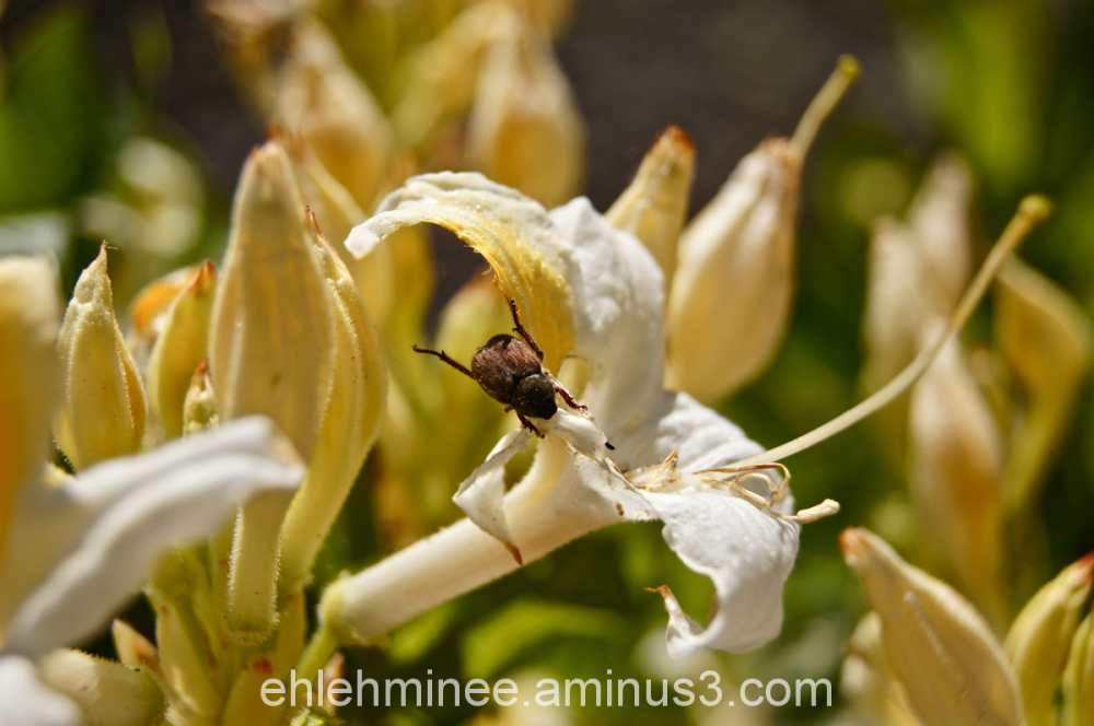 June Bug being an Acrobat.