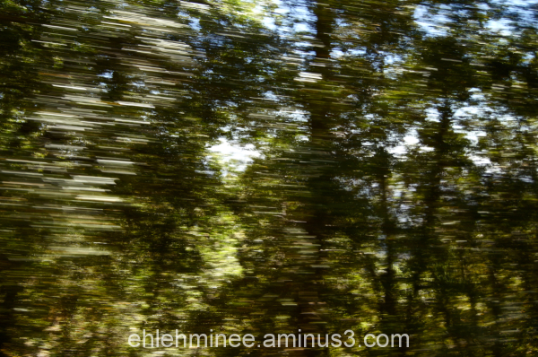 Passing trees in a car.