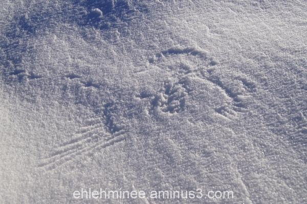 Bird impact in snow