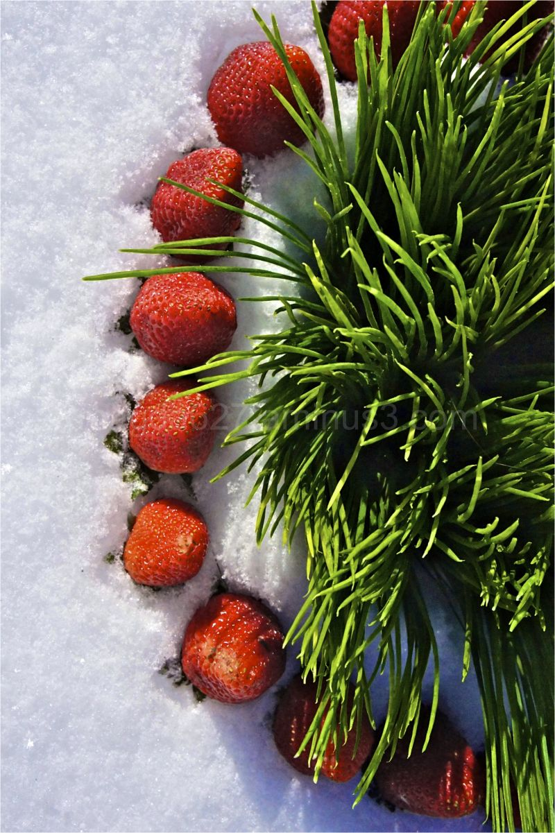 Strawberry winter