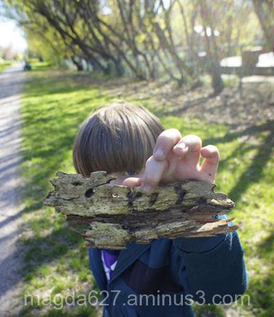 Antoni's many faces: wood