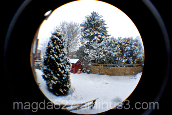 Fisheye winter garden
