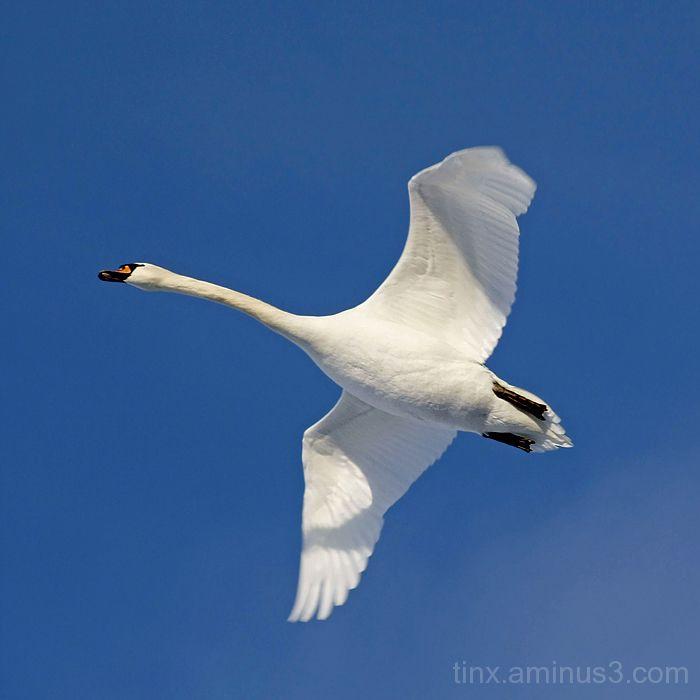 Lend, Flight