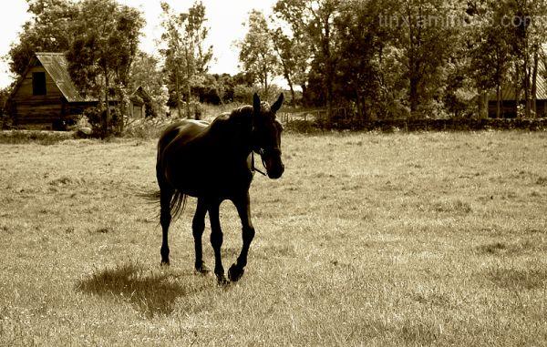 Hobune, A Horse