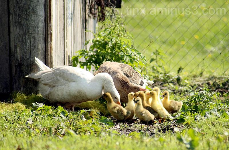 Perekond, Family