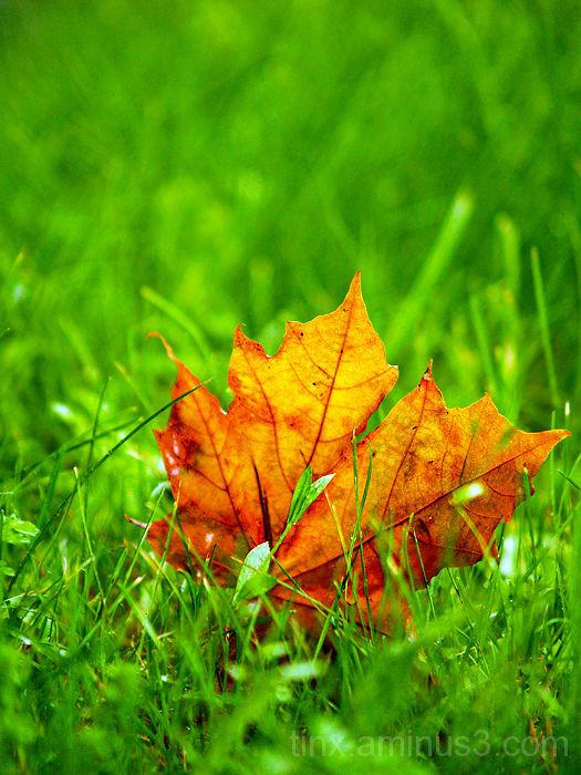 Sügis on tulekul, Autumn is coming