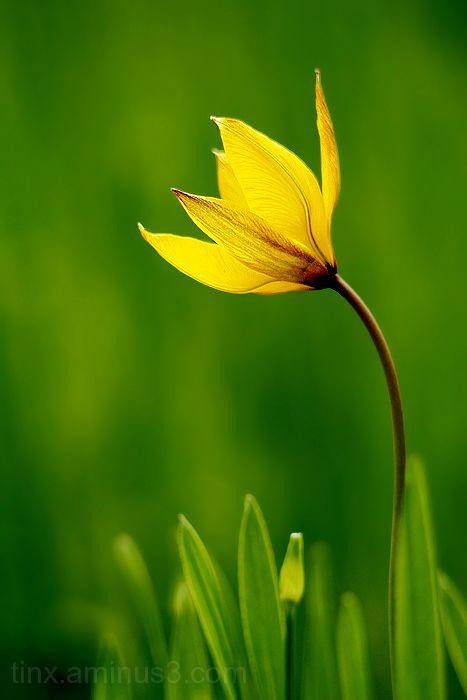 Kollane, Yellow