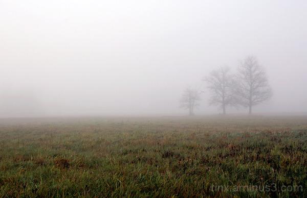 Udu, Fog (1)