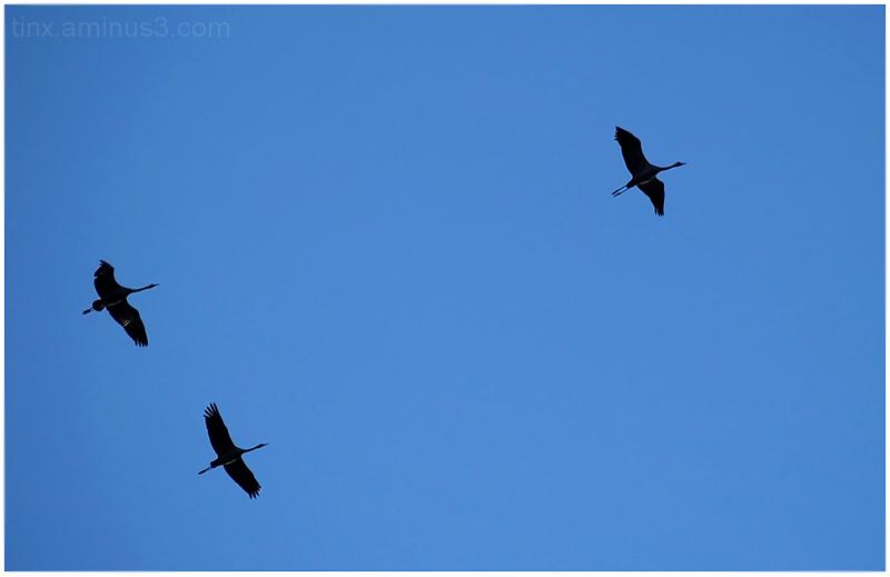Kolm siluetti, Three silhouettes