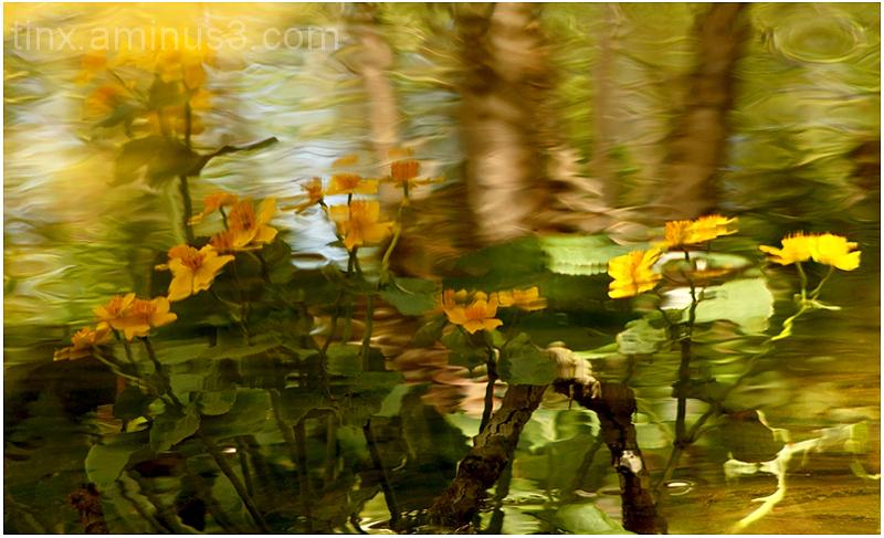 Peegeldus veel, Reflection on water
