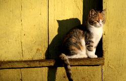 Kass, Cat