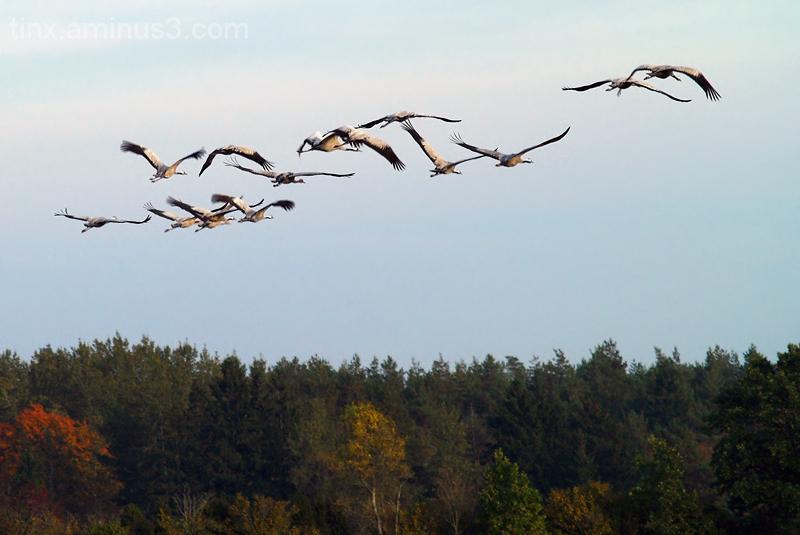 Sookured, Cranes