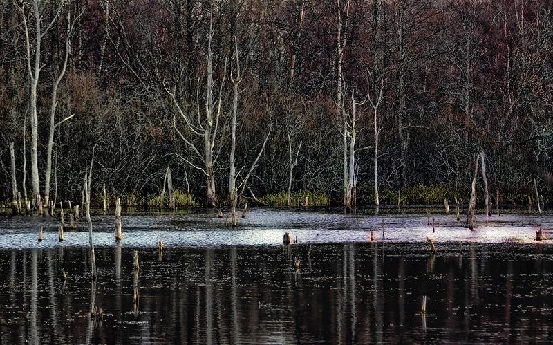 Surnud puud, Dead trees