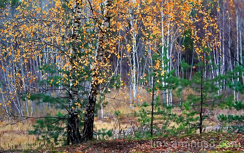 Sügis, Autumn