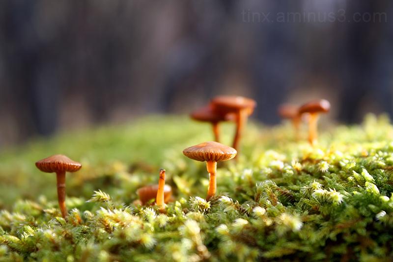 Seened, Mushrooms