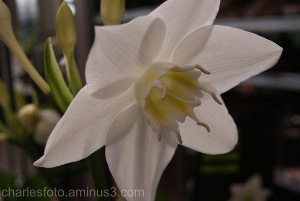 White beautiful flower