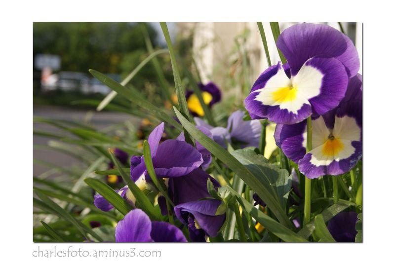 A picture in purple