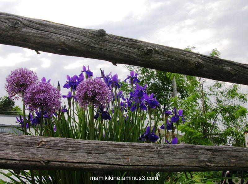 Couleurs printanières, spring colors