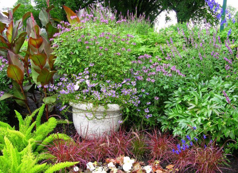Petit coin de jardin, little garden