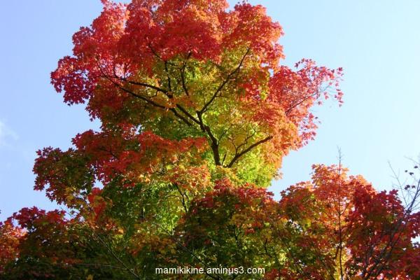 Couleur d'automne, autumn color