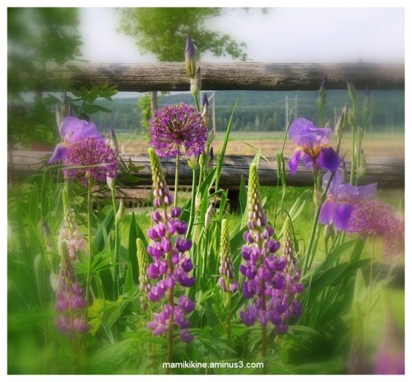 Doux printemps, sweet spring