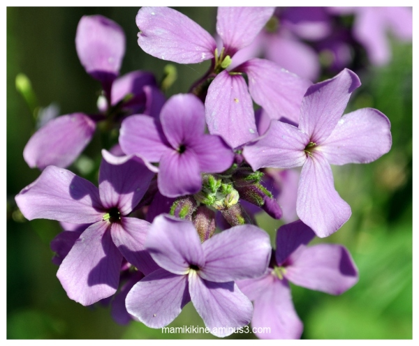 Jolies fleurs, lovely flowers